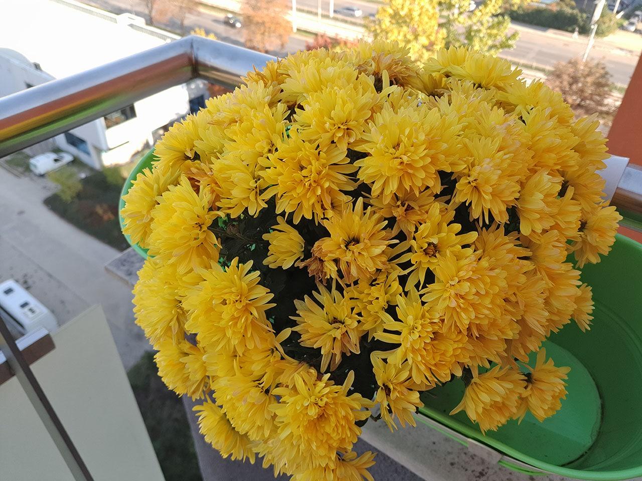 Meizu-Pro-5-sample flores